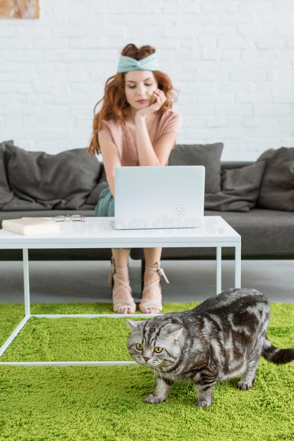 beautiful young woman working with laptop while her cat lying on floor on foreground royalty free stock photos