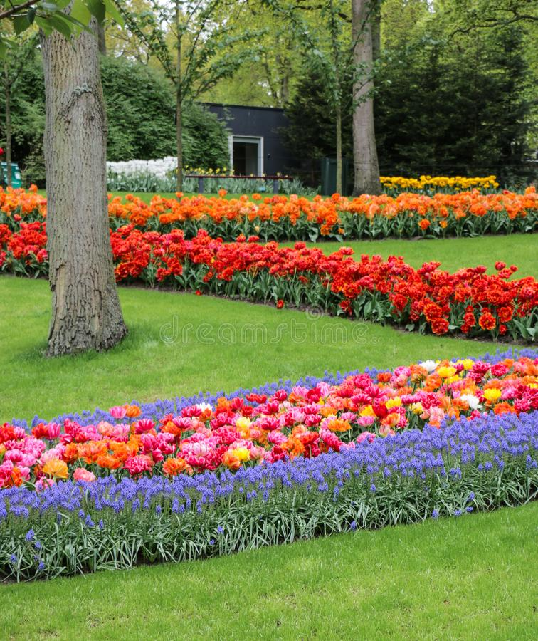 Beautiful zigzag grassed garden with many colored flowers royalty free stock photography
