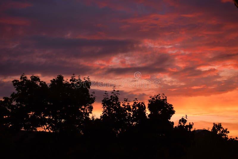 Beautifull在树上面上的日落片刻 库存图片
