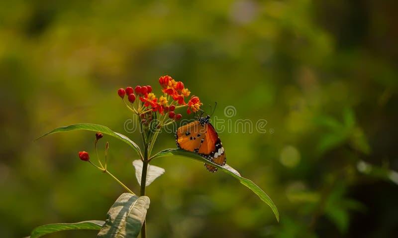 A beautifull butterfly. Beautifull butterfly in greenary stock photo