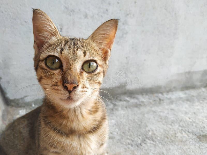 Beautifull cat. Animal, pet, cute royalty free stock image