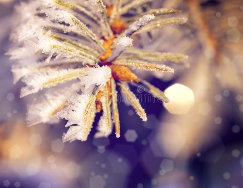 Beautifull christmass tree stock photo