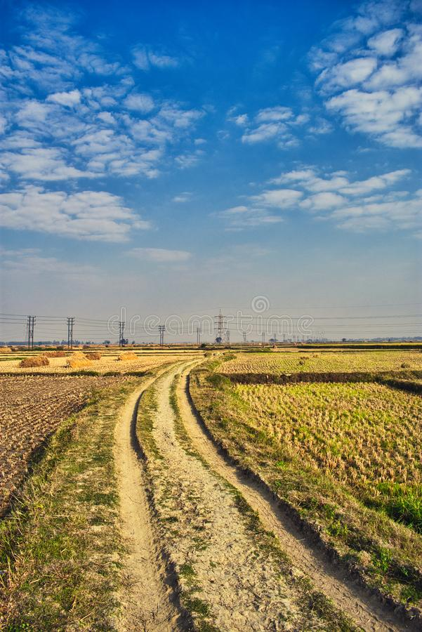 The last corp field in India. Beautifull corp fields in india West Bengal produsing rice in India royalty free stock images