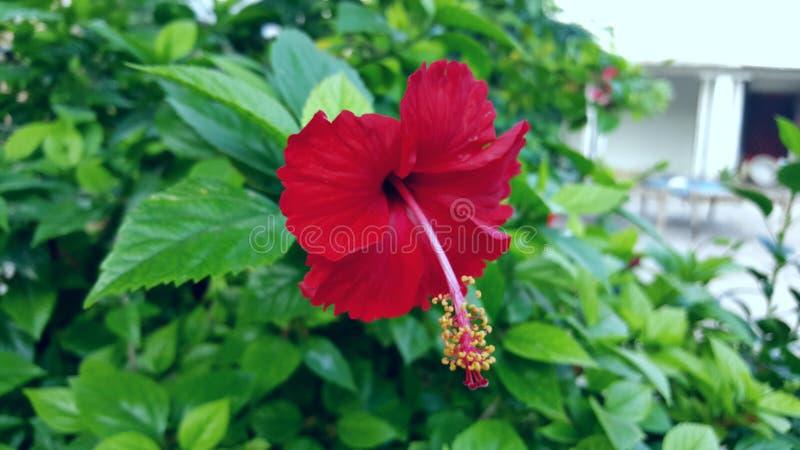 Beautifull Flower Landscape Green royalty free stock photo