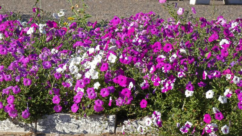 Beautifull flowers in the park. Alley royalty free stock photo