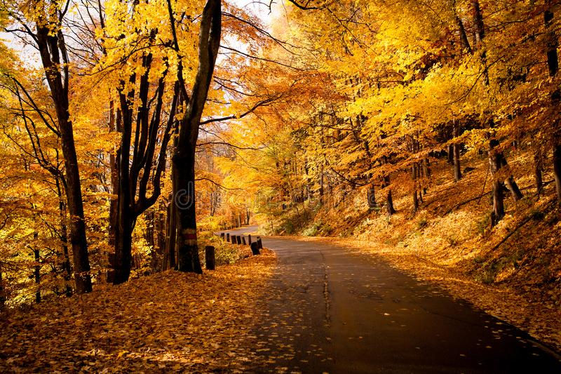 Autumn in Poland. golden road stock images