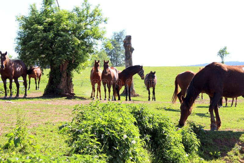Beautifull horses looking same direction royalty free stock images