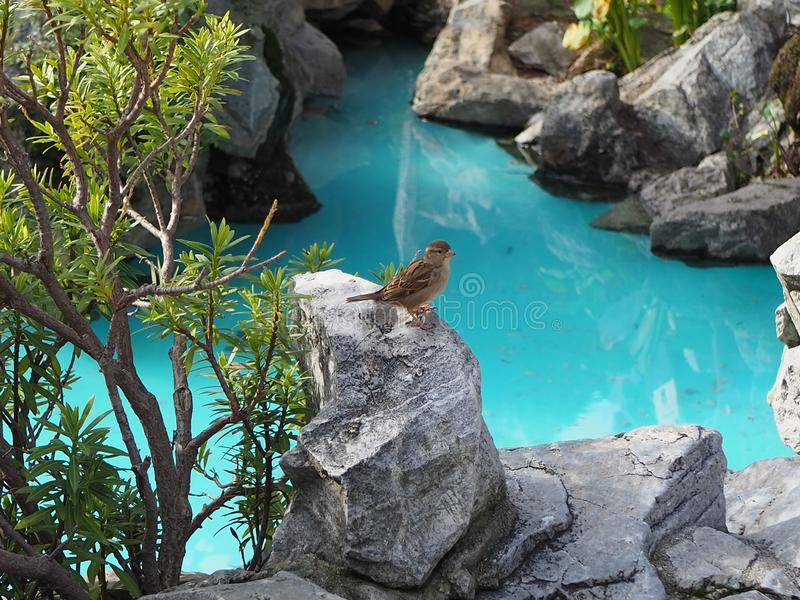 Beautifull landscape with house sparrow royalty free stock photos
