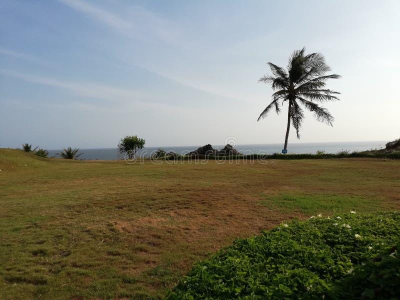 Beautifull landscape scenery holliday travelling palm tree coast beach sea bluesky greengrass stock photos