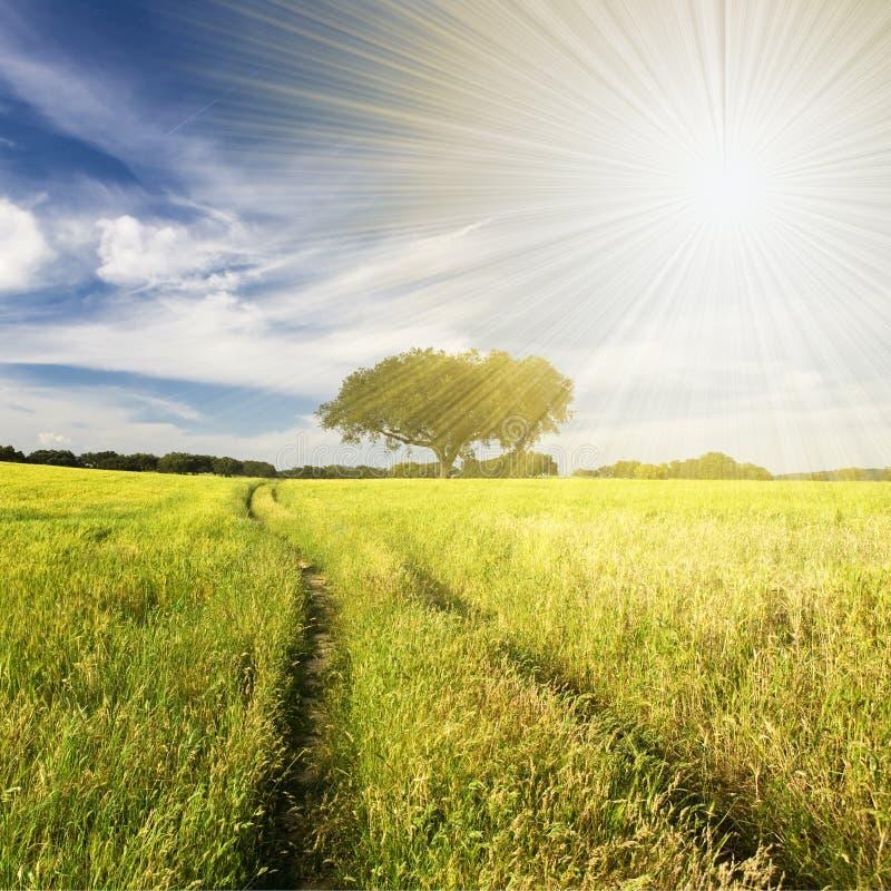 Beautifull Landschaft mit Sunrays stockfotos