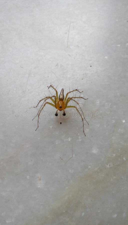 Beautifull looking spider royalty free stock image