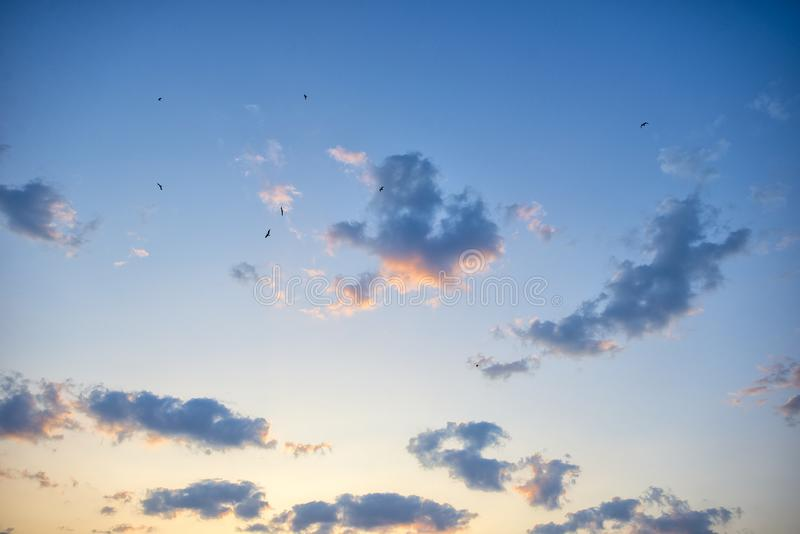 Beautiful sky with fluffy clouds. And birds in the view royalty free stock photography