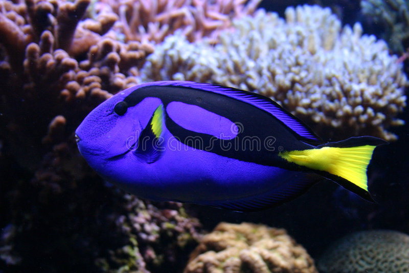 Beautifull tropical fish stock image