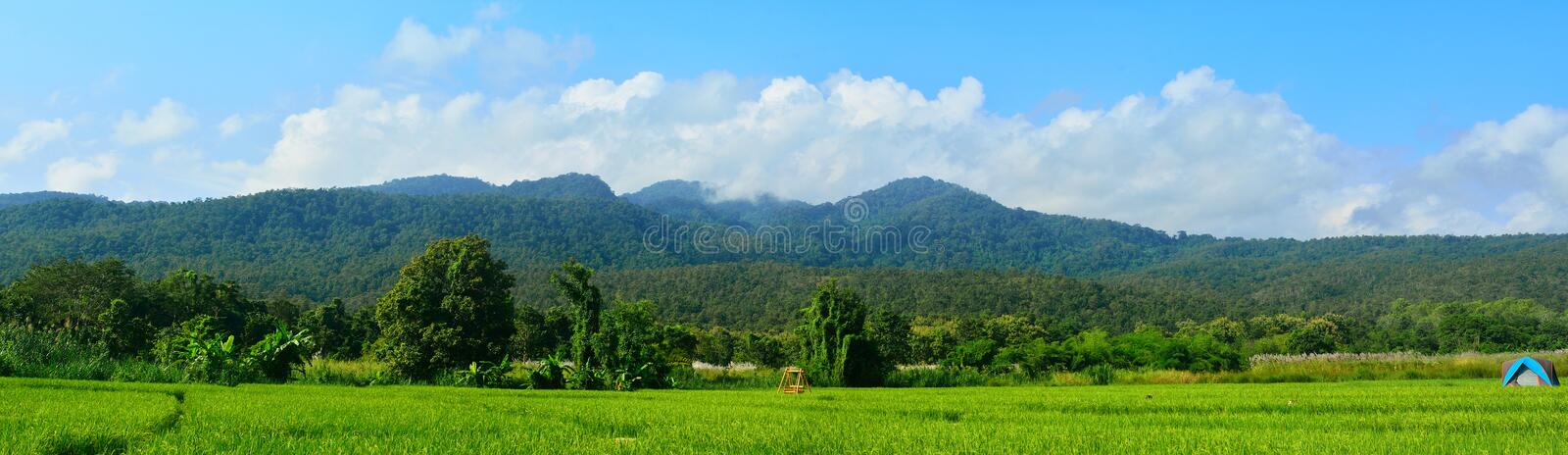 Beautifull view on rice fields in chiangmai, thailand. royalty free stock photography