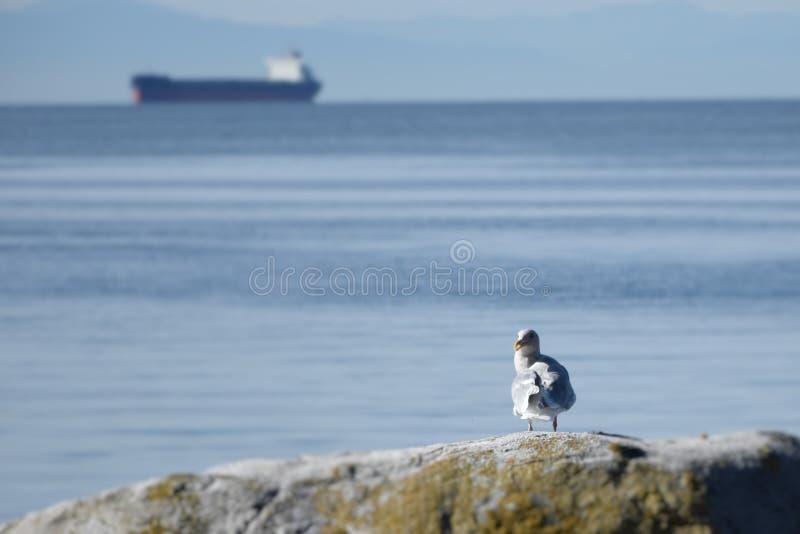 Beautifully bird stock photography