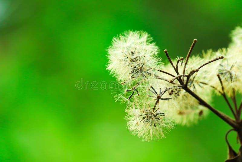 Beautifully blomstrade vita blommor - bild fotografering för bildbyråer
