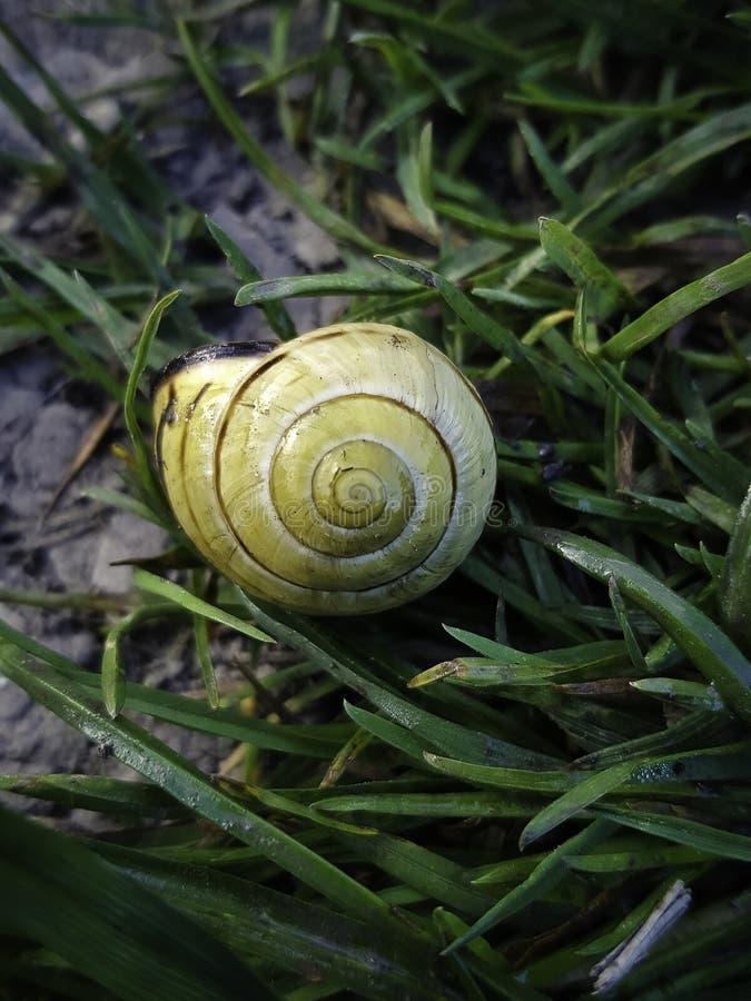 Beautifully coloured snail shell royalty free stock photo