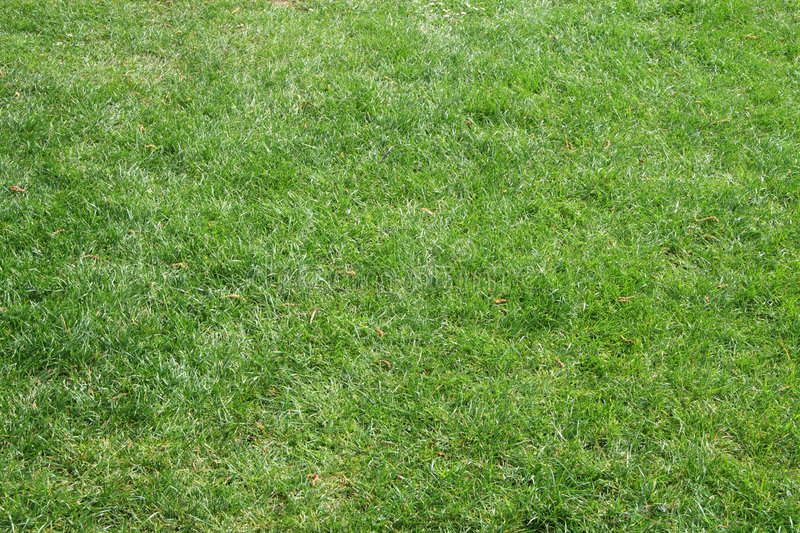 Download Beautifully Cut Field Grass Stock Image - Image: 2316247
