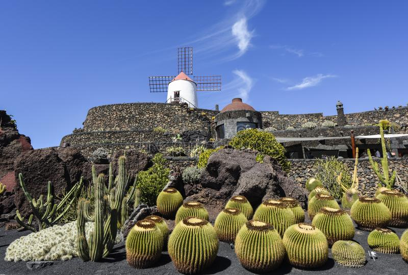 Beautifully designed cactus garden on Lanzarote with windmill in the background. Guatizia, Lanzarote, Canary Islands royalty free stock images