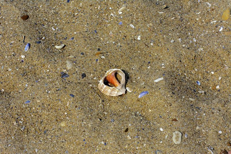 Beautifully format havsskal på sanden av en havsstrand under th royaltyfri bild