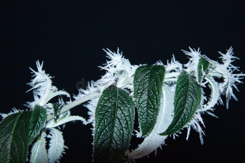 Beautifully fryste trädfilialer arkivfoto