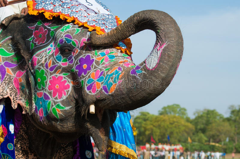 Beautifully målad elefant i Indien royaltyfri foto