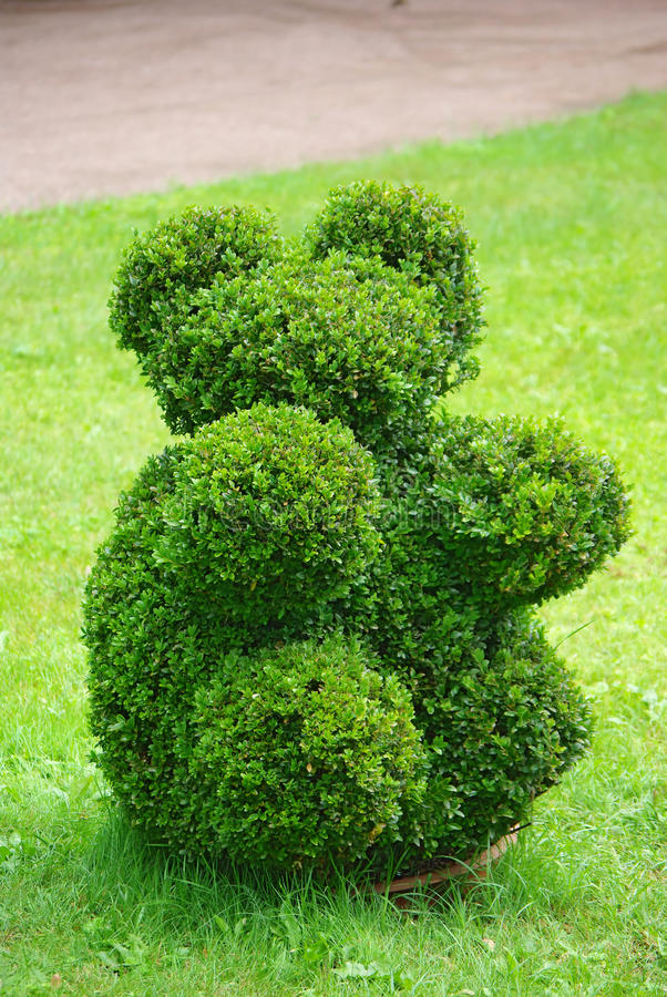 Beautifully manicured park plant. royalty free stock photography
