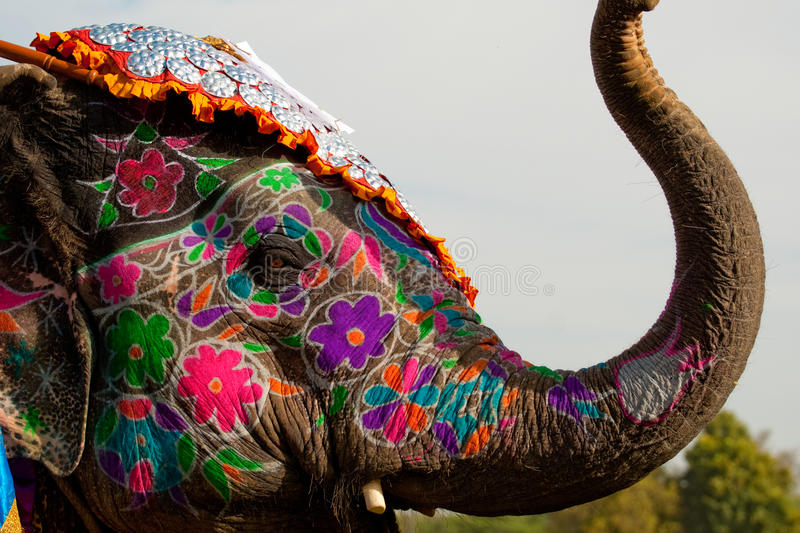 Beautifully painted elephant in India stock photo