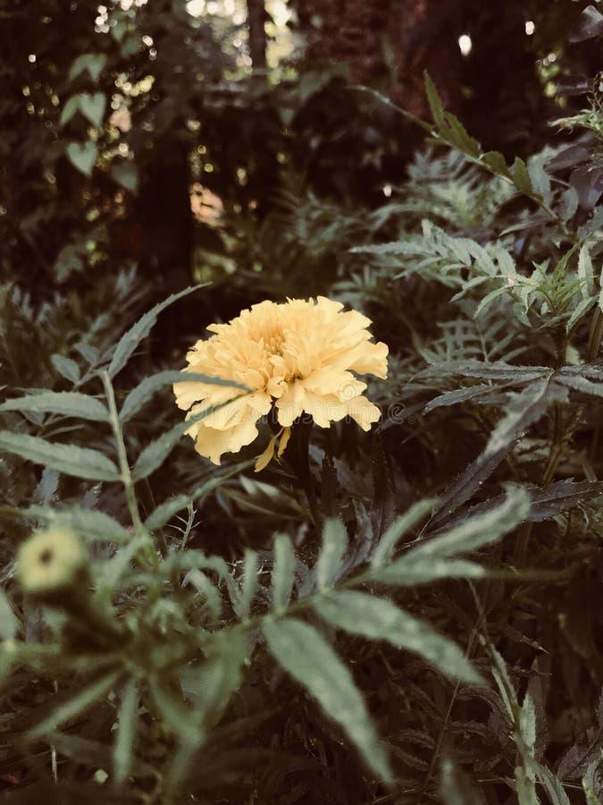 beautifulnessen royaltyfria foton