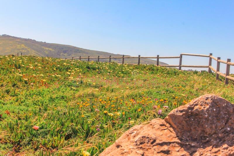 Beautifuls många blommor i Cabo Da Roca, huvudstad av Portugal arkivbilder