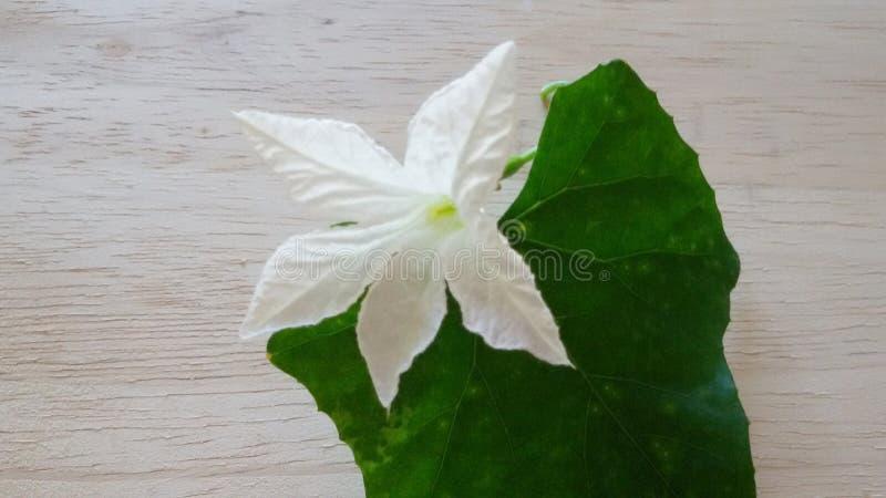 Beautifyl flower stock photo