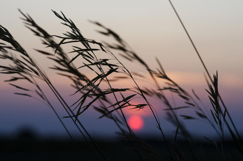 A beautiful pink sunset with insect and grass in I stock images