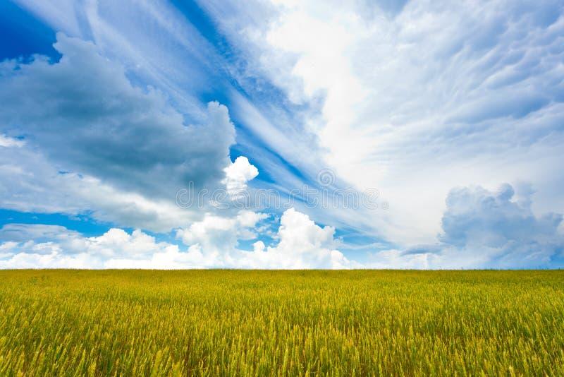 beautuful поле стоковая фотография