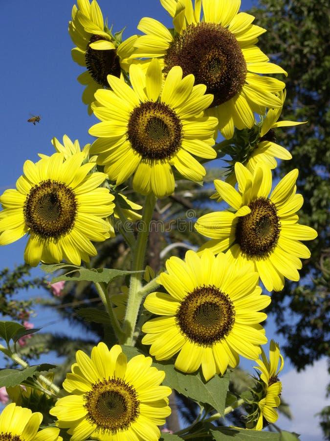 Download Beauty stock photo. Image of grub, honeybee, seed, petal - 2912958