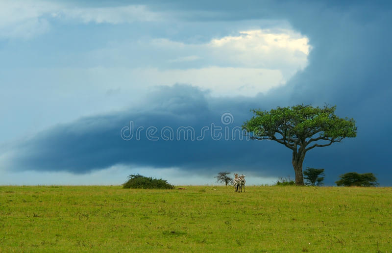 Download Beauty of Africa landscape stock photo. Image of field - 10342546