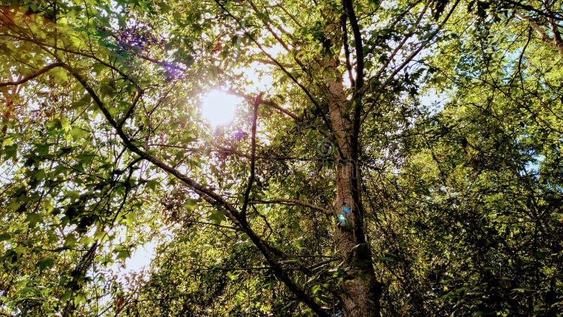 The Beauty Around Us. Beauty around nature seasons calming royalty free stock image