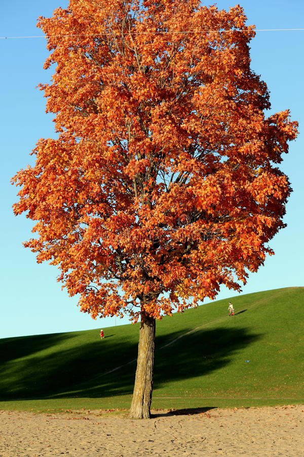 Beauty of Autumn stock images