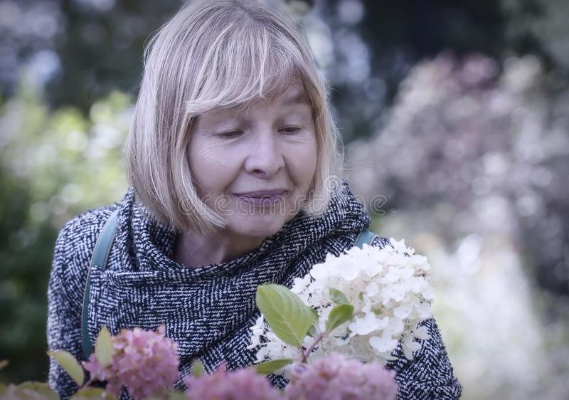 Beauty of autumn. Portrait of an elderly woman admiring flowers hydrangeas stock images