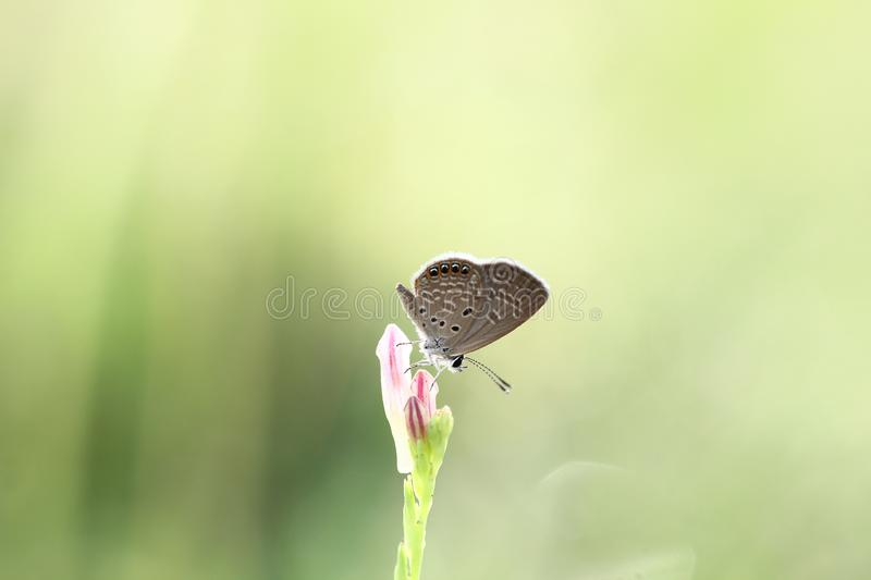 the beauty of butterflies royalty free stock images