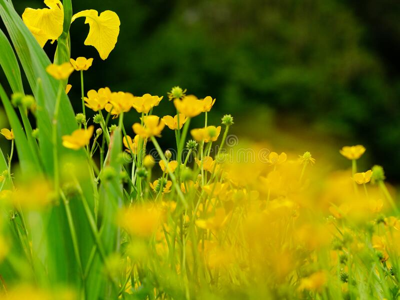 The beauty of butterflowers in the spring stock photos