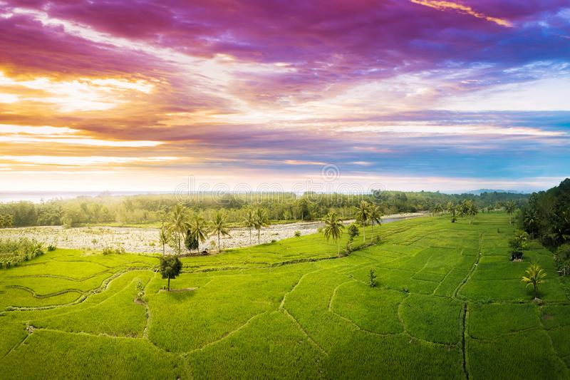 beauty color of landscape with top aerial view in panorama fields in indonesia country royalty free stock photo