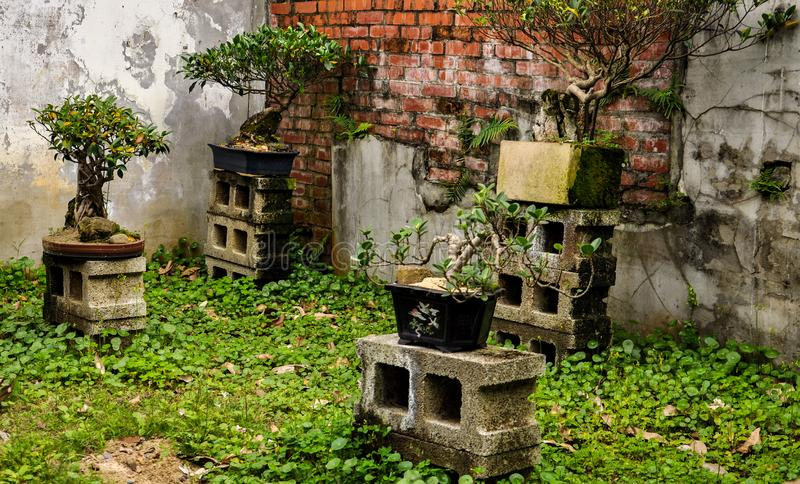 Beauty and decay: bonsai trees among decaying walls. Bonsai garden in urban decay. Wasteland city space and art installation. Crumbling walls and abandoned