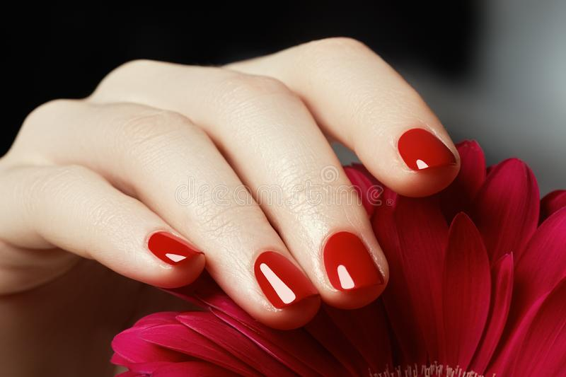 Beauty delicate hands with manicure holding pink flower close u stock photography