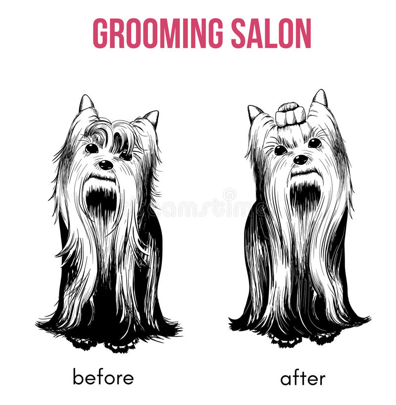Beauty Dog Salon Template. With hand drawn yorkshire terriers before and after grooming procedures isolated vector illustration stock illustration