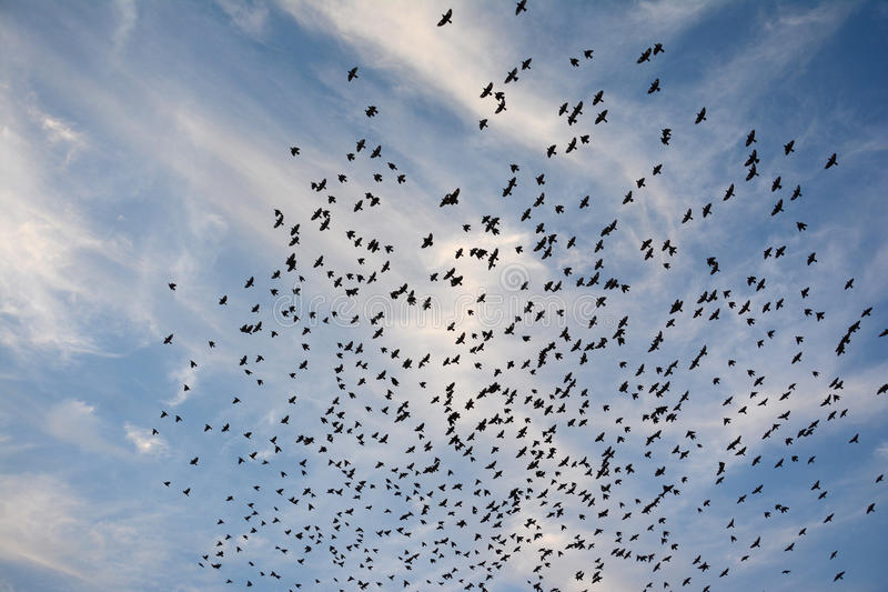 BEAUTY OF EVENING CLOUDS AND FLOCKING BIRDS BIKANER stock image