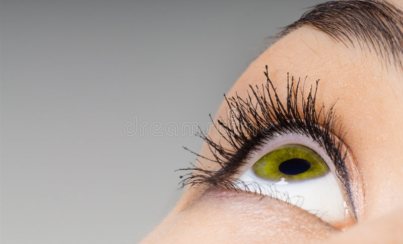 Beauty eye. The macro image of the beauty eye royalty free stock photo