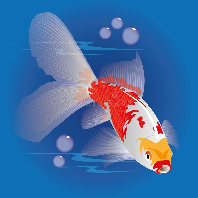 The beauty fish stock images