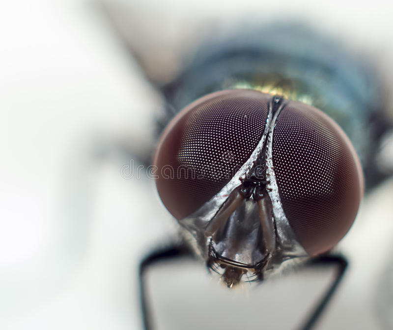 Beauty Flies stock image