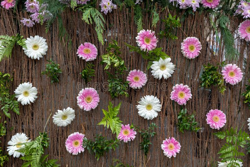 Beauty floristic decoration with white and pink gerbera flowers. royalty free stock image