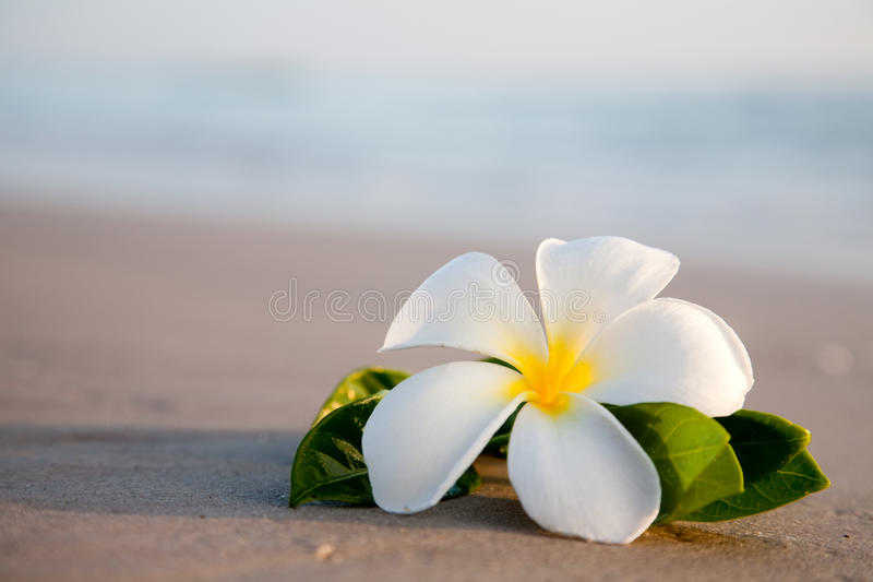 Download Beauty Flowers On The Beach Stock Image - Image: 13050851